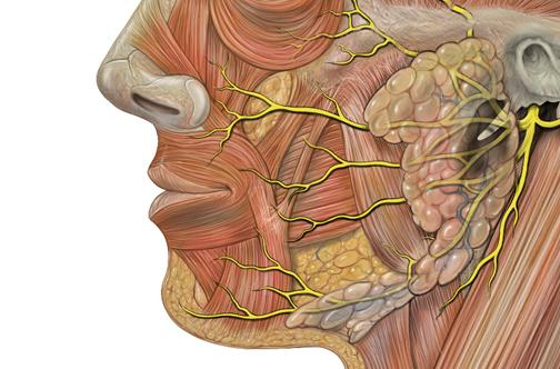 Facial Nerve Clinic Siu School Of Medicine